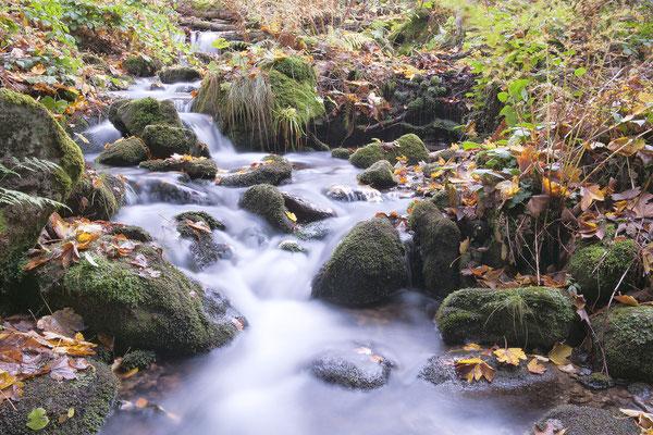 An der kleinen Ohe im NP Bayerischer Wald