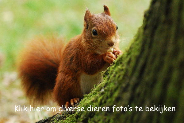 Super Dieren foto's - Fotografie Jolvel #VC57
