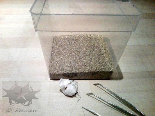 Vermiculite als Bodensubstrat