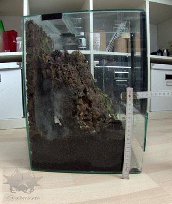 Terrarium Baumbewohner