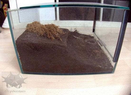 Terrarium mit nur 20 cm Höhe
