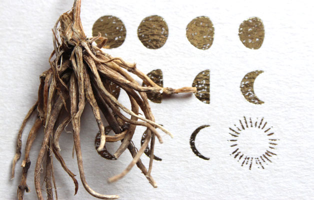 Baldrian-Valeriana officinalis