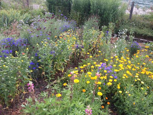 Anbauversuche im früheren Garten