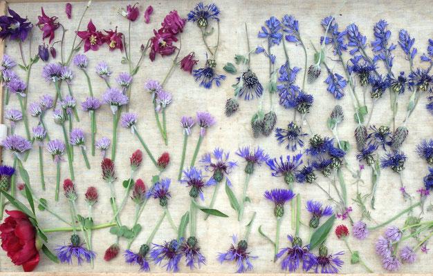 Experimentierfreudiges Trocknen verschiedener Blumen