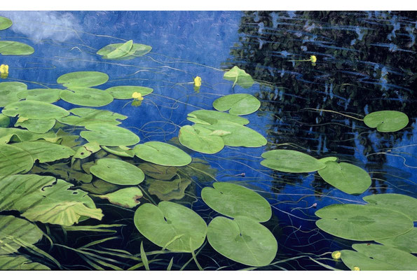 Yellow Water Lillies  // oil on canvas