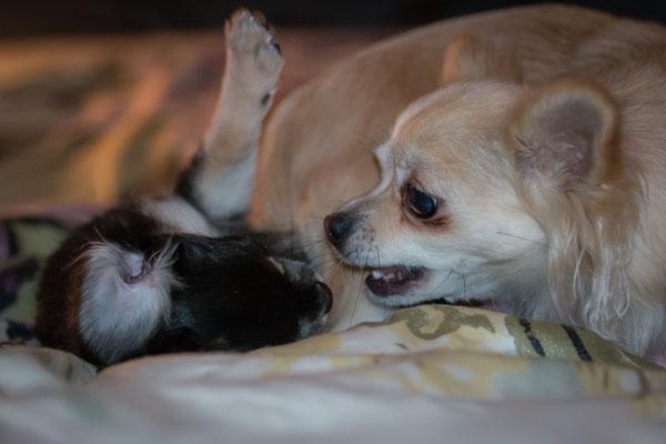 Molly och Nellie. Det ser värre ut än vad det är, tjejerna busar friskt i sängen... :-)