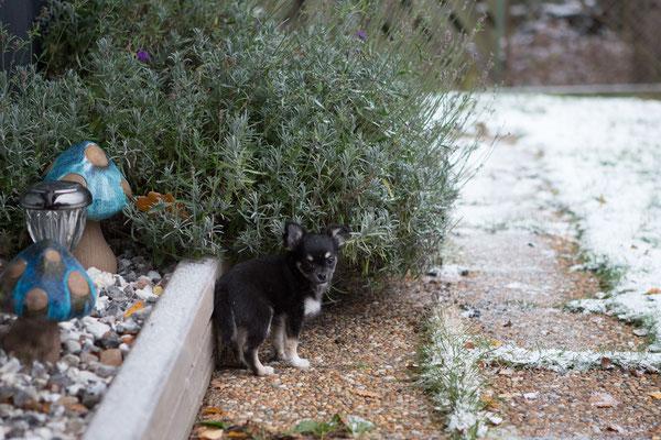 Lite misstänksam mot snön är hon allt...