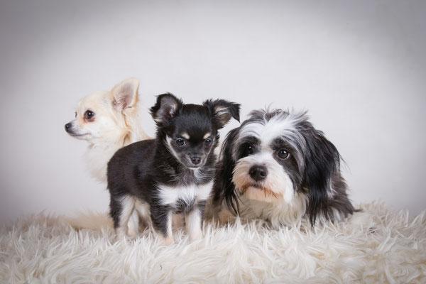 Nellie, Molly och Wilma