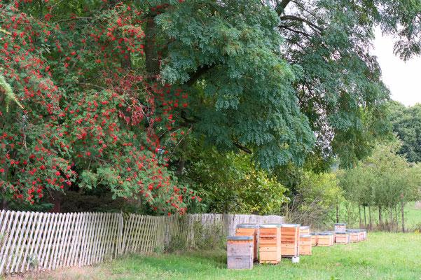 Herbst - auch für die Bienen