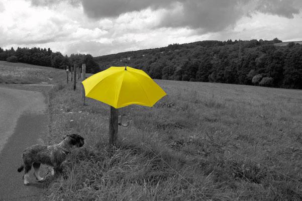 Der gelbe Schirm