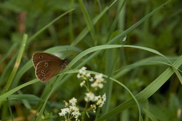Schornsteinfeger im Gras