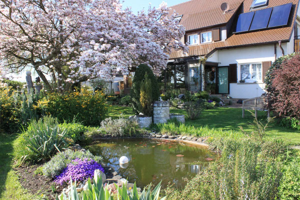 Gartenteich im östlichen Garten mit blühender Magnolie