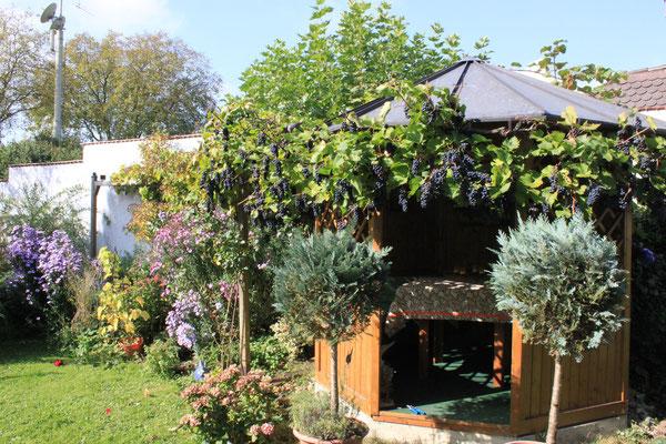 Mit Weinreben bewachsener Pavillon