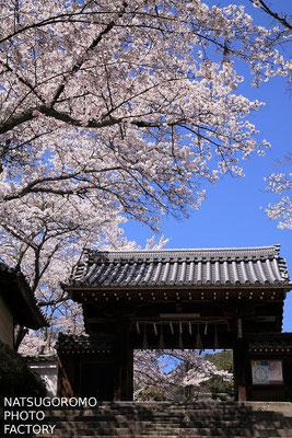 京都、毘沙門堂門跡 Bishamon in Yamashina, Kyoto