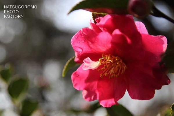 京都府立植物園 2018年1月7日