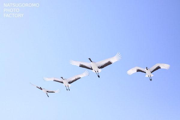 釧路湿原にて