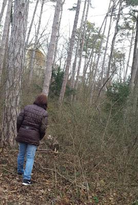 Systemische Arbeit im Wald. Der Wald gibt vielen Menschen in jeder Jahreszeit viel Energie. Systemisches Arbeiten im ruhigen Umfeld führt meist sehr schnell zum entscheidenden Punkt
