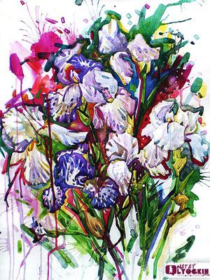 Irisi 2012/NL