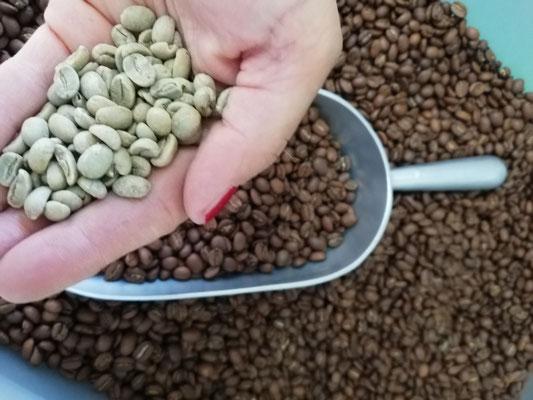 Roh und gerösteter Kaffee im Vergleich