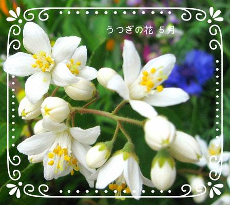 ♡ りびえ米 LIVIE MAI 卯木(うつぎ)の花(5月)