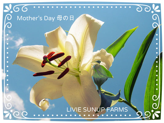 ♡ Mother's Day 母の日 ♥ LIVIE SUNUP FARMS