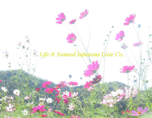 COSMOS  Life & Natural Infusions Livie Co.