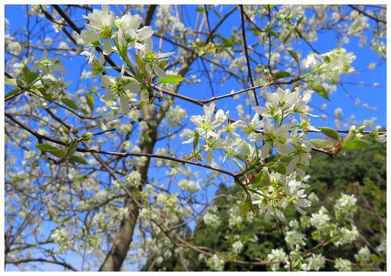 ♡ Livie Spring flowers ジューンベリー