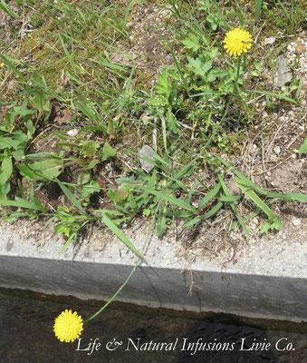 ♡ 田園側の野花