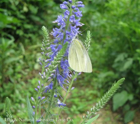 ♡ 花と蝶