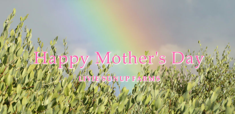 母の日 HAPPY MOTHER'S DAY ♪  LIVIE SUNUP FARMS