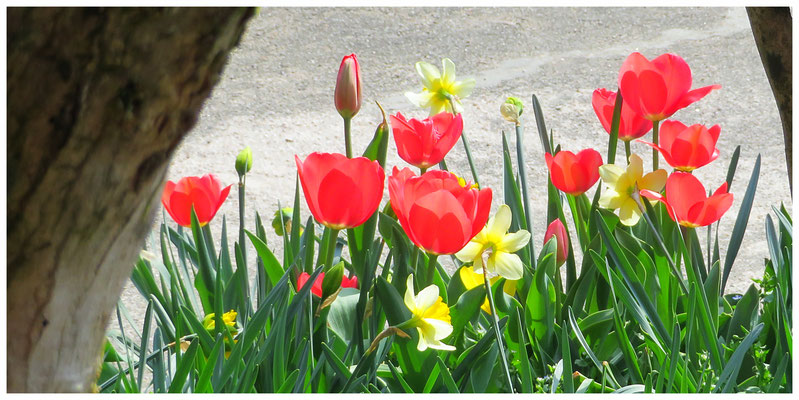 ♡ Livie Spring flowers チューリップ 水仙