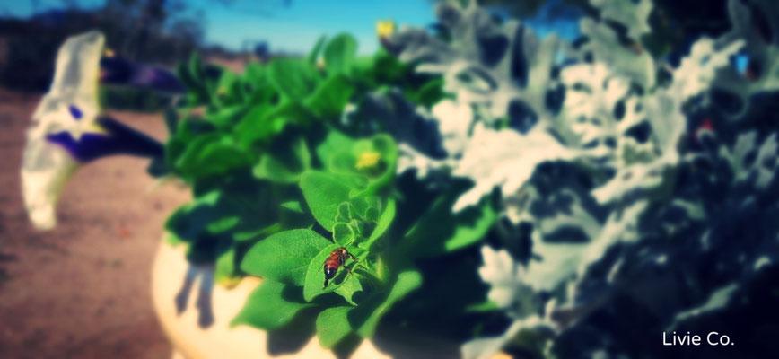 ♡ BEE