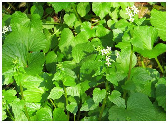 ♡ Livie Spring flowers 葉わさび