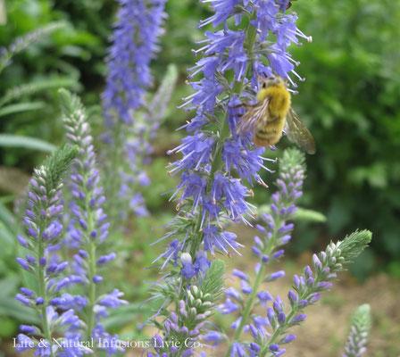 ♡ 花と蜂