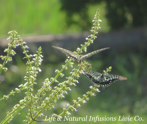 Life & Natural Infusions Livie Co.
