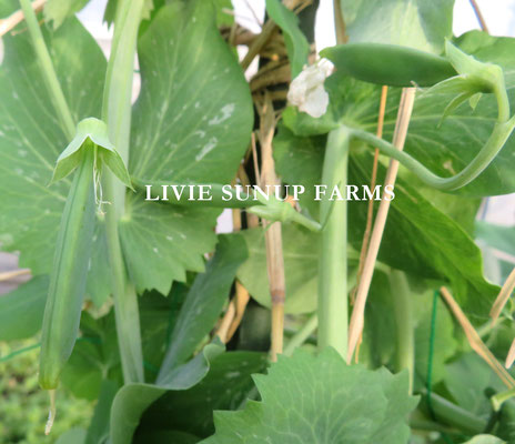 旬野菜☆Livie Seasonal Vegetables