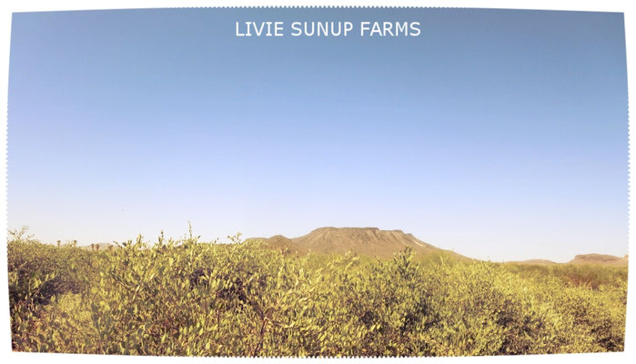 ♡ LIVIE SUNUP FARMS