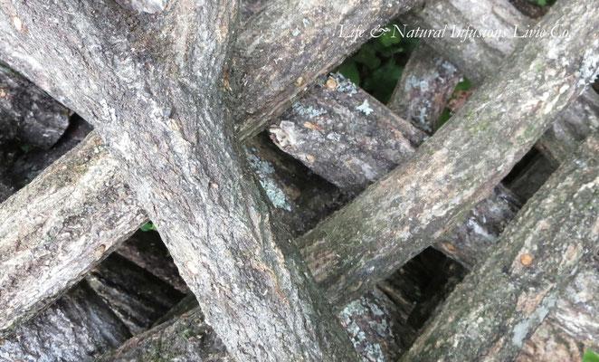 ♡ 原木栽培のシイタケ