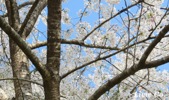 Spring color 春色 Livie Co.☆彡