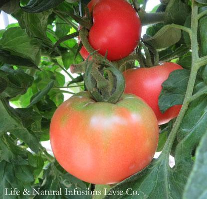 ♡ トマト