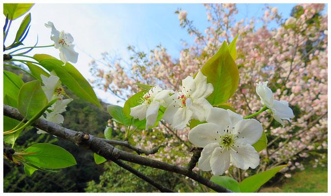 ♡ Livie Spring flowers