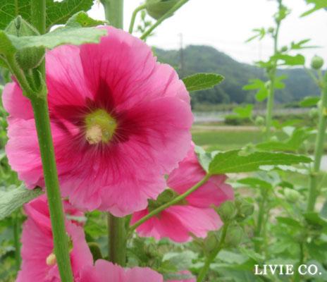 JUNE 6月 Livie Co.☆彡