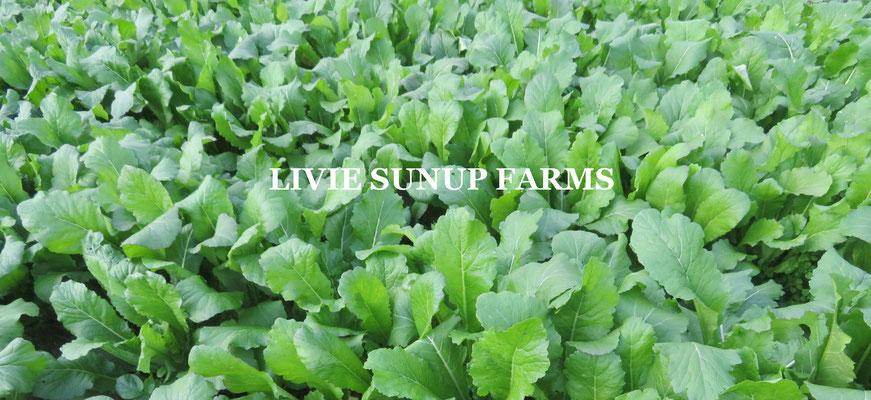 りびえ旬野菜☆Livie Seasonal Vegetables ☆