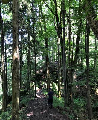 Abstieg auf dem Max-Schäfer-Steig nach Duft