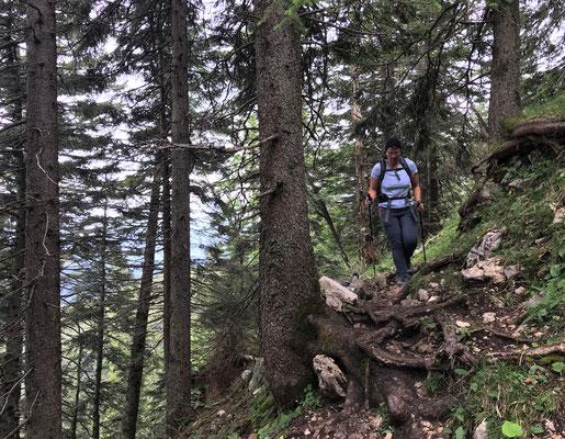 Durch den Bergwald unterhalb des Lechnerkopfs