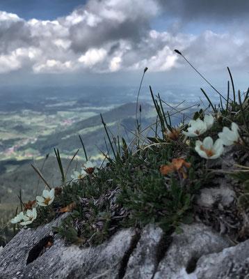 Blumen am Breitenstein