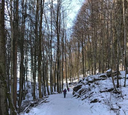 Auf den letzten Metern durch den Wald nach Sachrang