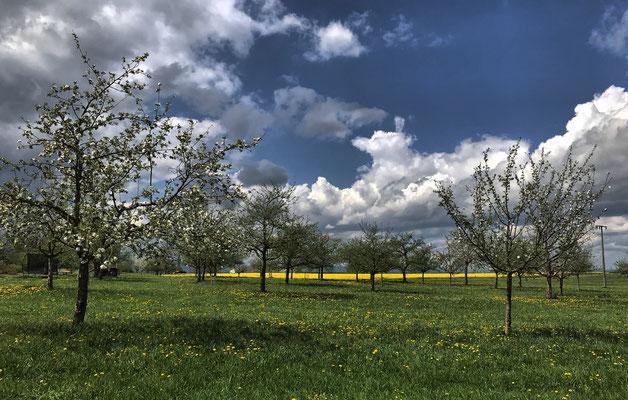Obstbäume kurz vor Geiging