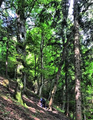 Steiler Aufstieg auf den Sulzberg