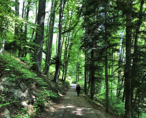Im Wald am Steinberg